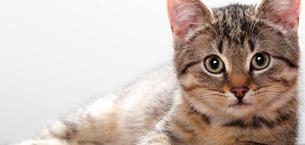 комкующийся наполнитель кошачий купить